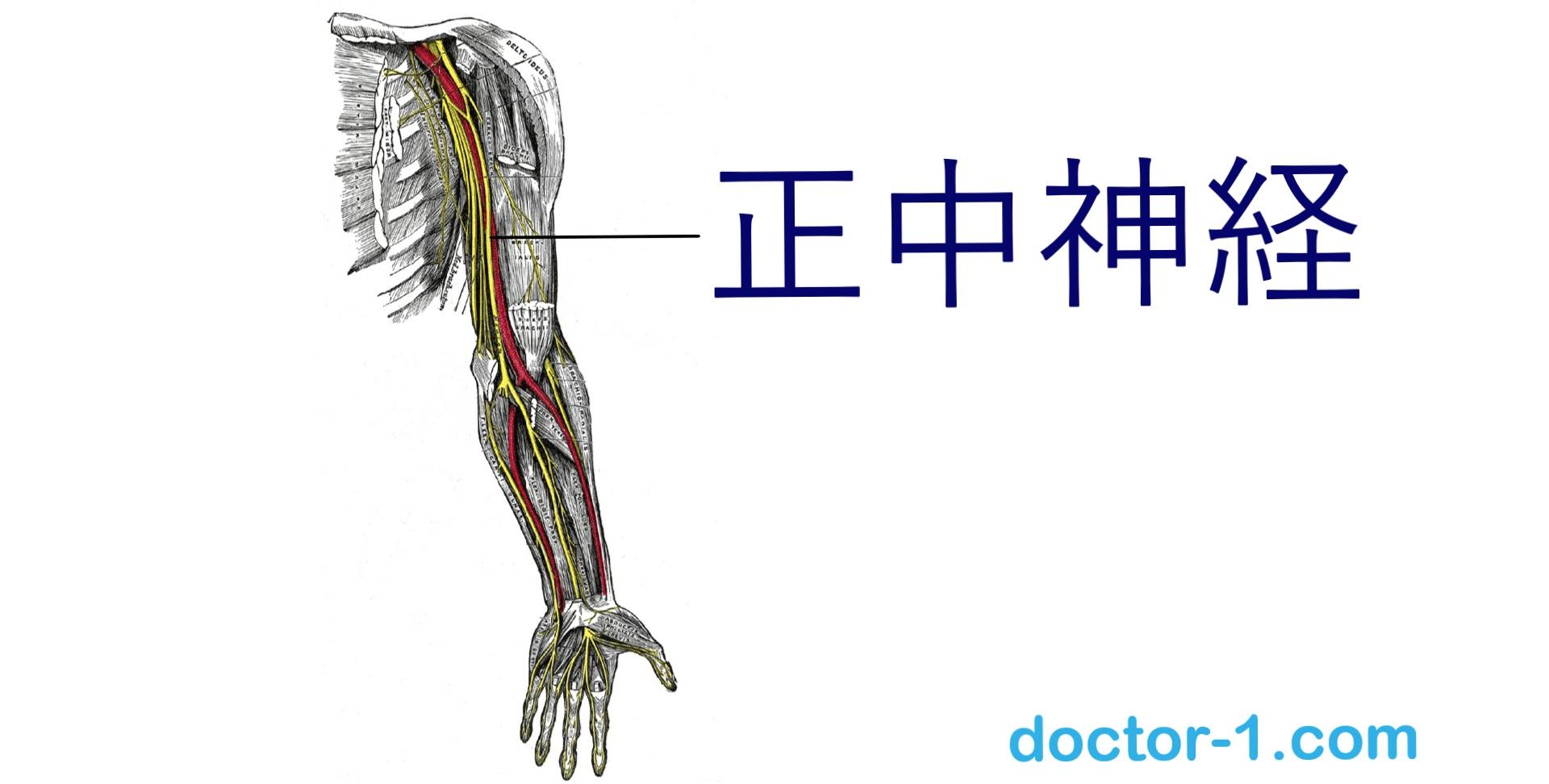 median-nerve
